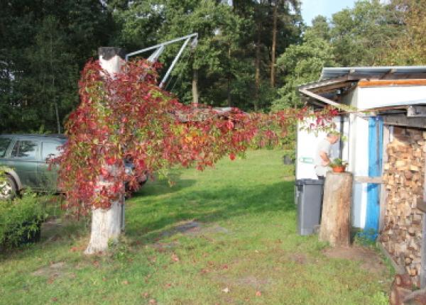 Vildsvin jagt i Tyskland samt raadyr og daadyr
